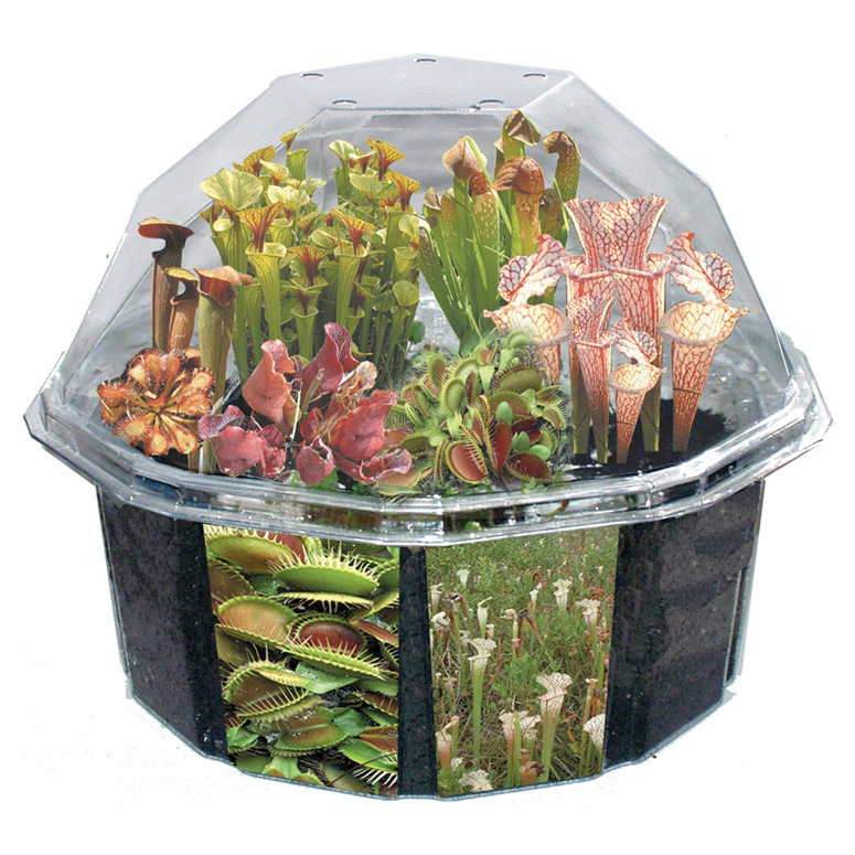 carnivorous creations dome terrarium kit instructions